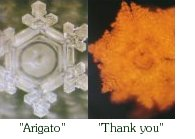 aigua arigato, thank you